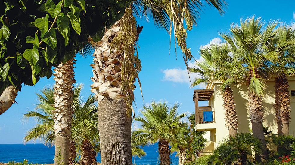 exotic lavish gardens Club Marine Palace