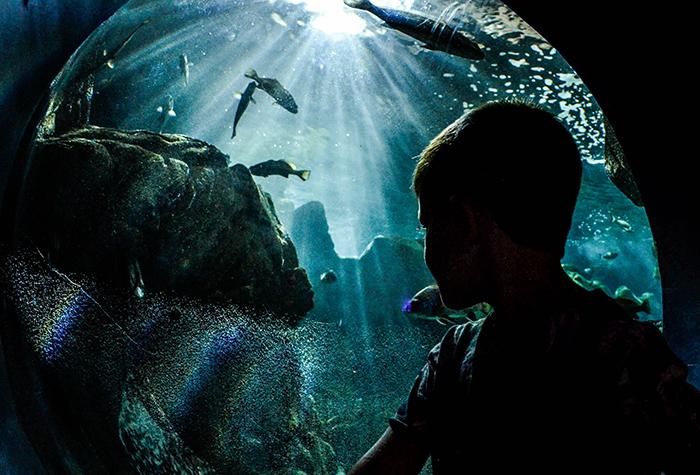 12-Crete-Aquarium